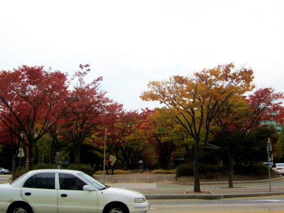 Downtown Autumn Foliage